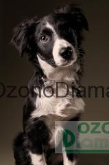 eliminar olores de mascotas perros gatos